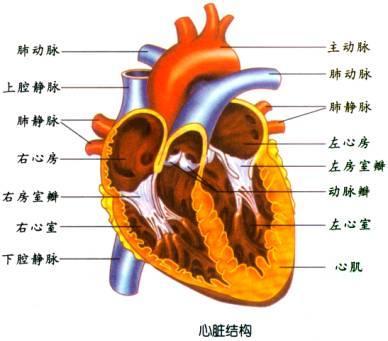 心绞痛做哪些检查,心绞痛的检查项目有哪些