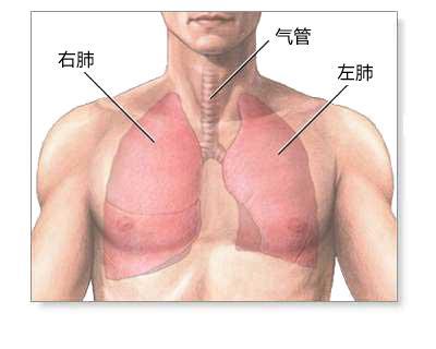 尘肺的检查项目有哪些,尘肺病需要做哪些检查