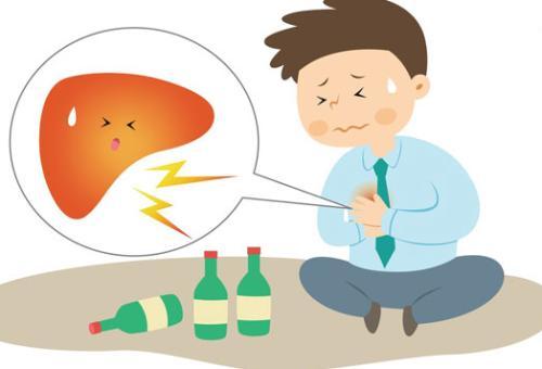 肝脏的功能和保健,怎样保养好肝脏